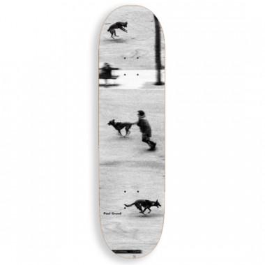 Board Polar Paul Grund Dog Studies